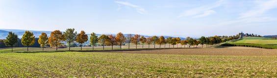 Panoramiczny krajobraz z aleją, polami i lasem, Zdjęcia Royalty Free