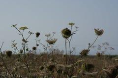 Panoramiczny krajobrazowy Kefalonia Grecja zdjęcia stock