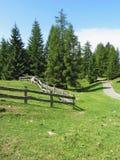 Panoramiczny lasowy widok Fotografia Royalty Free