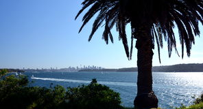Panoramiczny miasto widok z drzewkiem palmowym Zdjęcia Royalty Free