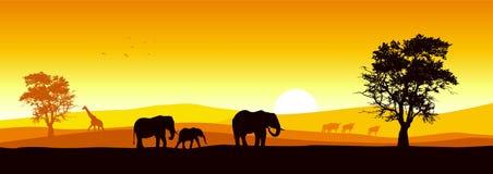 panoramiczny safari
