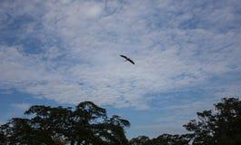 Panoramiczny widok ładny tropikalny zmierzch Fotografia Stock
