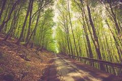 Panoramiczny widok droga przez halnego lasu obrazy royalty free