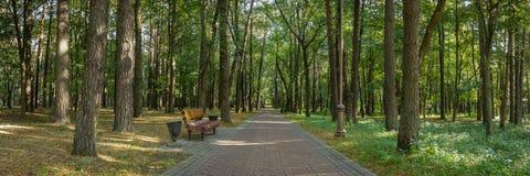 panoramiczny widok jawny miasto park z ławką na krawędzi starannej ciemniutkiej alei wykładał z wysokimi drzewami zdjęcia royalty free
