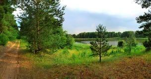 Panoramiczny widok jezioro w lesie Fotografia Stock