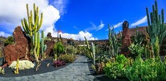 Panoramiczny widok kaktusa ogród w Lanzarote Zdjęcie Royalty Free