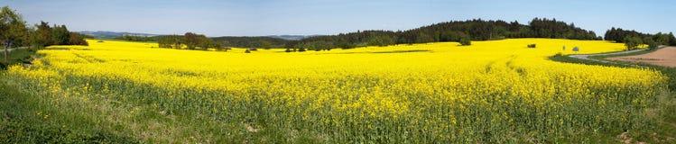 Panoramiczny widok kwiecenia pole rapeseed fotografia royalty free