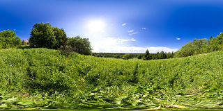 Panoramiczny widok las Zdjęcia Stock