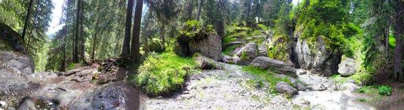 Panoramiczny widok las od góry Bucegi na lecie Fotografia Stock