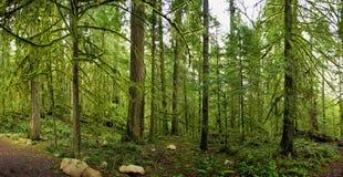 Panoramiczny widok las tropikalny w Vancouver wyspie, Kanada zdjęcie stock