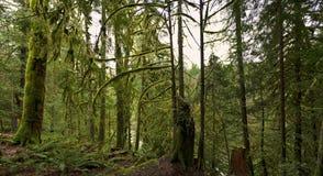 Panoramiczny widok las tropikalny w Vancouver wyspie, Kanada fotografia stock