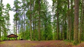 Panoramiczny widok las w Vancouver wyspie, BC, Kanada zdjęcia stock