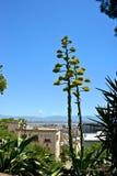 Panoramiczny widok miasto Cagliari Zdjęcie Royalty Free