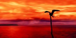 Panoramiczny widok morze, niebo i seabird sylwetka Trinidad i Tobago przy półmrokiem Zdjęcia Stock
