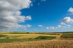 Panoramiczny widok na kolorów żółtych polach z dojrzałą ciężką banatką, grano duro Obrazy Stock