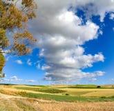 Panoramiczny widok na kolorów żółtych polach z dojrzałą ciężką banatką, grano duro Zdjęcie Royalty Free