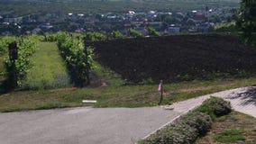 Panoramiczny widok na wino winnicy i lochu zdjęcie wideo