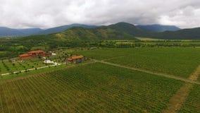Panoramiczny widok ogromna gronowa plantacja i dom, rolnictwo, uprawia ziemię biznes zbiory wideo