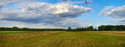 Panoramiczny widok pole blisko lasu pod niebieskim niebem z whit Fotografia Stock