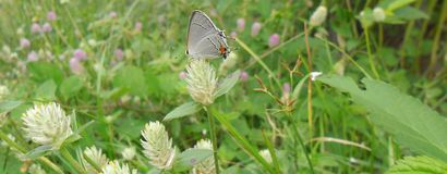 Panoramiczny widok pozuje na kwiatach motyl obraz stock