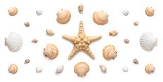 Panoramiczny widok rozgwiazda i seashells odizolowywający na bielu zdjęcie royalty free