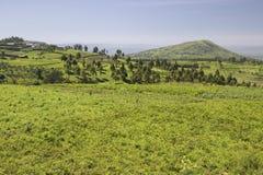 Panoramiczny widok Wielki rift valley w wiośnie po opady deszczu dużo, Kenja, Afryka Obraz Royalty Free