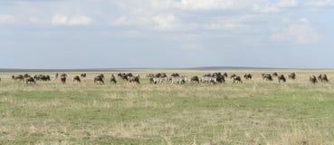Panoramiczny widok z Serengeti zwierzętami Zdjęcia Royalty Free