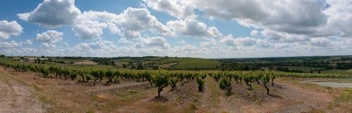 Panoramiczny winogrady Fotografia Royalty Free