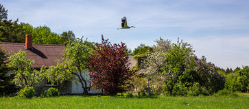 Panoramiczny wiosna krajobraz Obrazy Royalty Free