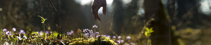 Panoramiczny wizerunek piękna natura z męską ręką wskazuje a Obrazy Stock