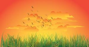 panoramiczny zmierzch Fotografia Stock