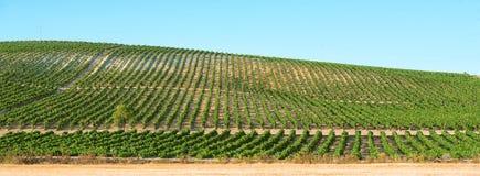 Panoramique d'un vignoble Images stock