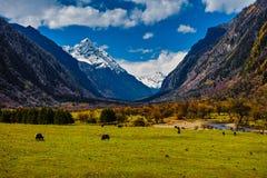 Panoramique de la montagne de quatre filles Photo libre de droits