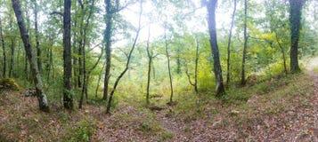 Panoramique des bois image libre de droits