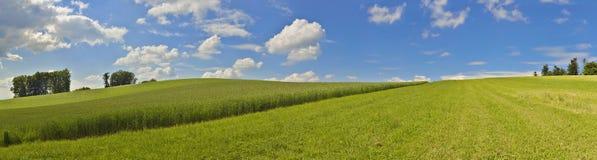 Panoramisch beeld met graangebied en blauwe hemel Stock Afbeeldingen