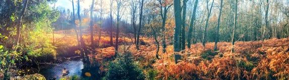 Panoramisch de herfstlandschap met bosstroom royalty-vrije stock foto