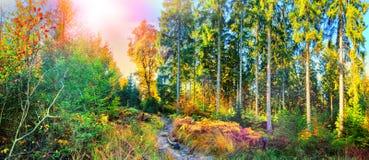 Panoramisch de herfstlandschap met bosweg royalty-vrije stock afbeeldingen