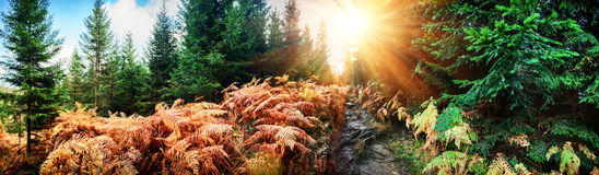 Panoramisch de herfstlandschap met bosweg Stock Foto's