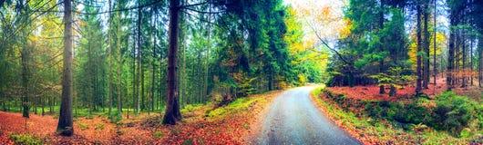 Panoramisch de herfstlandschap met bosweg Backgro van de dalingsaard royalty-vrije stock afbeeldingen