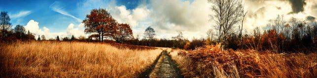 Panoramisch de herfstlandschap met de weg van het land stock fotografie
