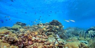 Panoramisch koraalrif Stock Foto