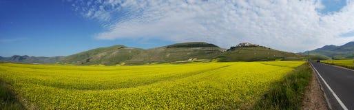 Panoramisch landschap met gele bloemen stock afbeeldingen