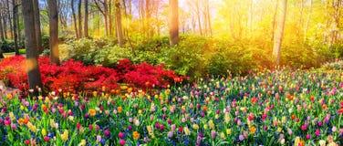 Panoramisch landschap met veelkleurige de lentebloemen Aard backg royalty-vrije stock foto's