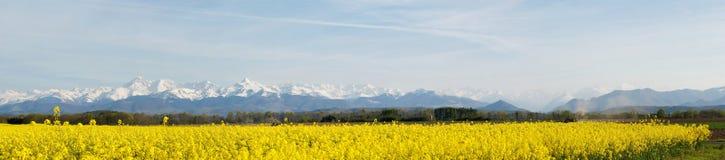 Panoramisch landschap van een raapzaadgebied stock afbeelding