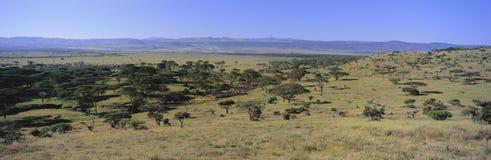 Panoramisch landschap van Lewa-Milieubescherming, Kenia, Afrika met Onderstel Kenia in mening Stock Fotografie