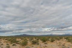 Panoramisch Mojave-woestijnuitzicht in de lente na de regen royalty-vrije stock foto's