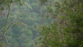 Panoramisch | Regenwald-Tal, Casanare, Kolumbien stock video footage
