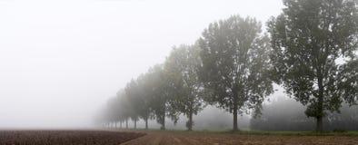 Panoramisch - Reihe der Bäume Lizenzfreie Stockfotos