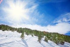 Panoramisch schot van bos in de winter royalty-vrije stock foto's