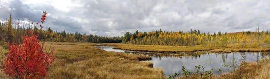 Panoramisch van Dalingskleuren royalty-vrije stock foto's